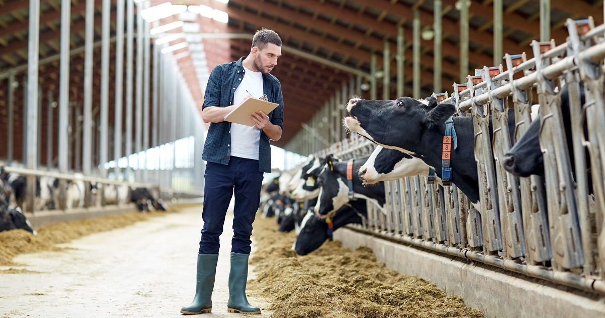 (New) Theoretical price of dairy cows and the essence of investment